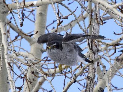 Van Hook Wetlands bird species