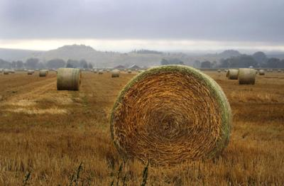 Hay stands ready in a field