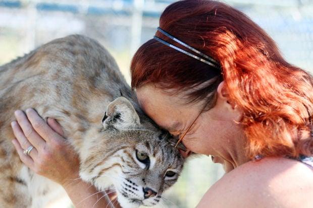 Stevensville Couple Have Big Love For Pet Lynx Bobcats Hometowns