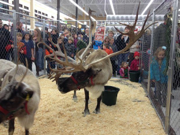 Reindeer at Murdoch's in Missoula