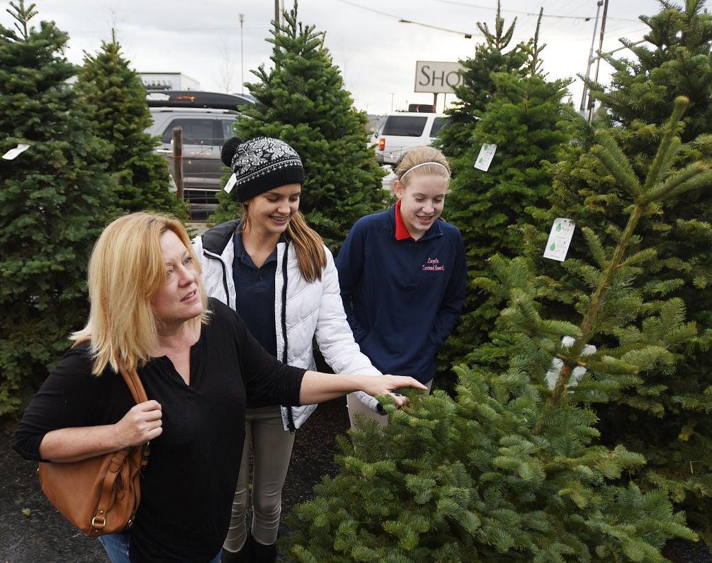 121015 christmas tree lot-1-tm.jpg