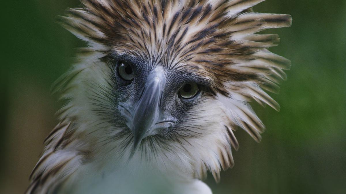 'Bird of Prey'