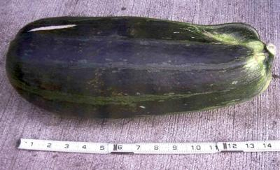 092410 bear zucchini