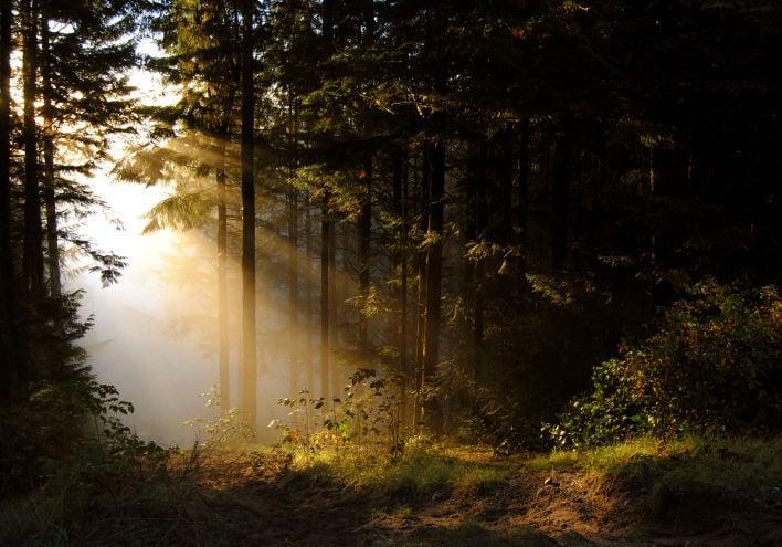 forest stockimage