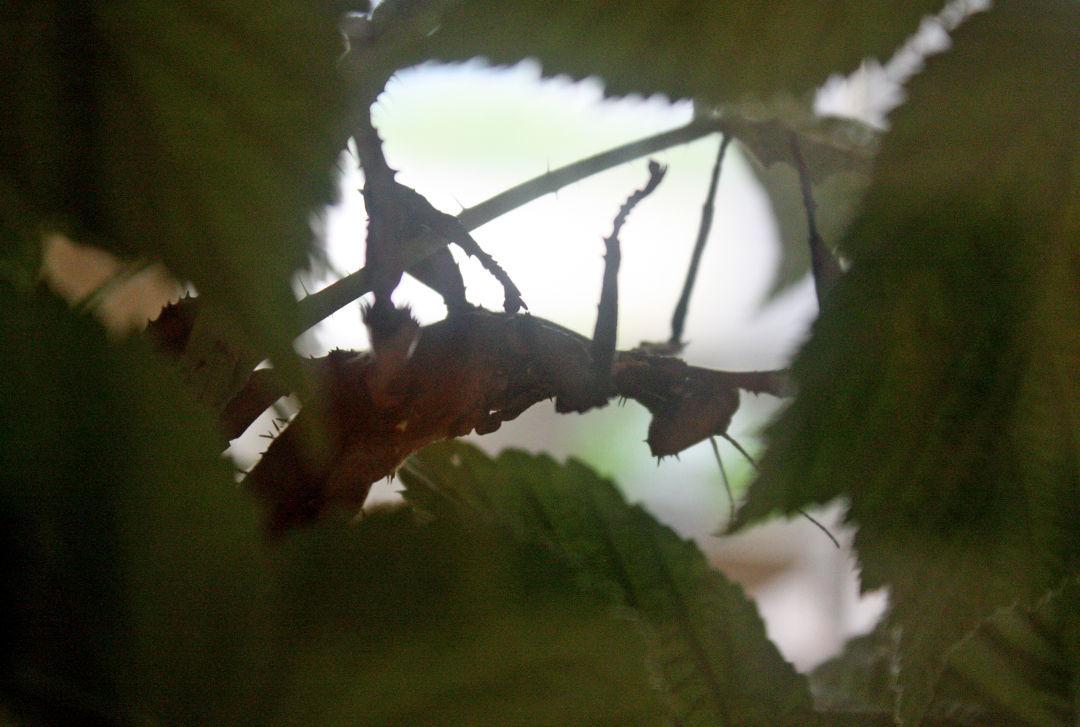 062515 insectarium 02 lb.jpg