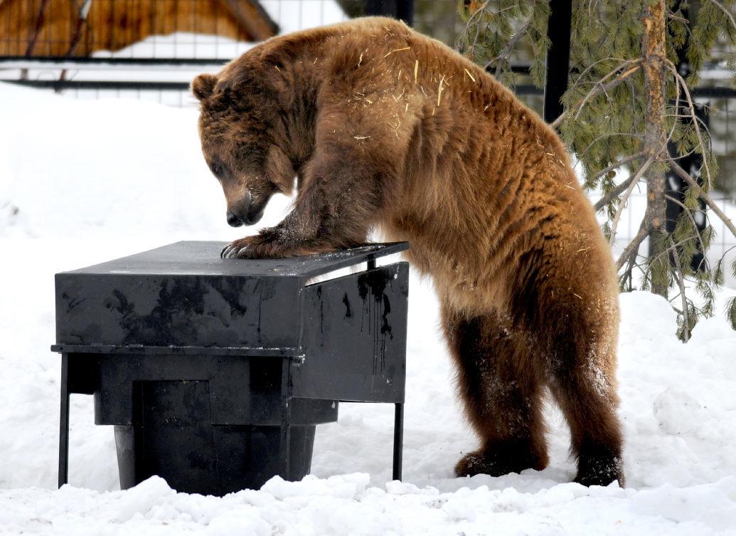120915 bear1 mg.jpg