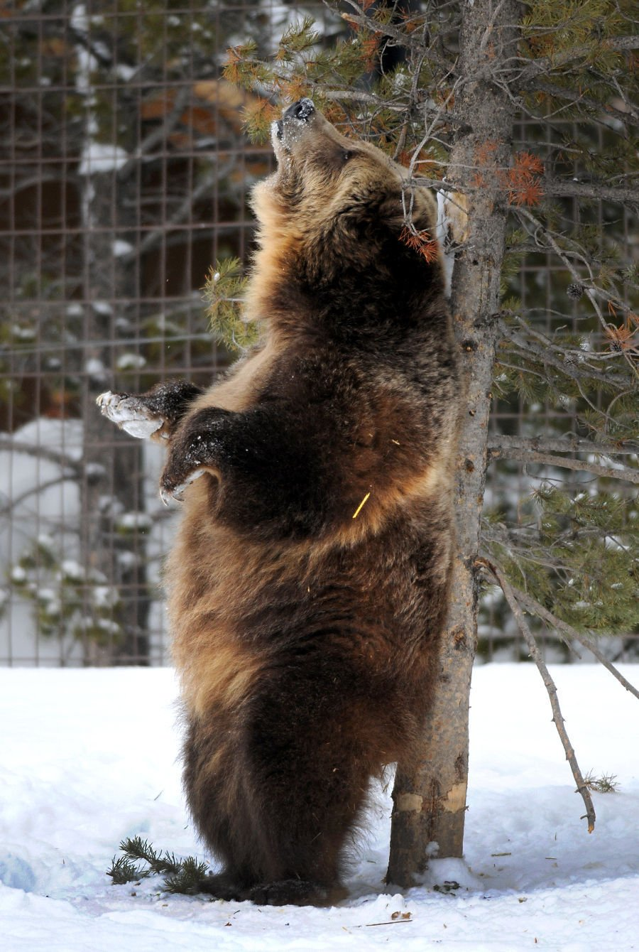 120915 bear2 kw.jpg