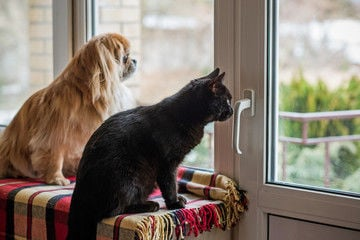 Dog cat pets waiting in window