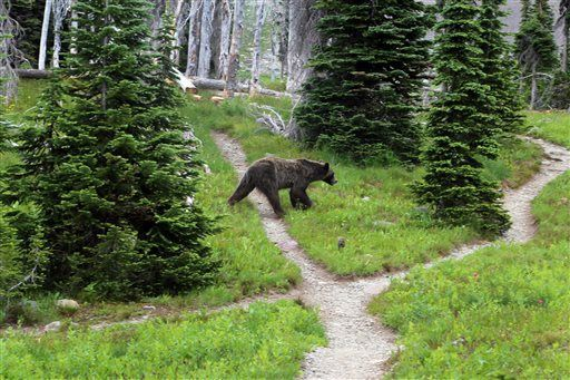 APNewsBreak: States divvy up Yellowstone-area grizzly hunt (mis)