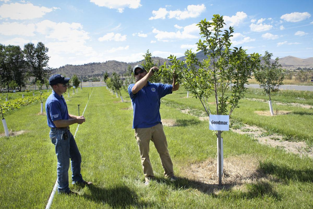 MSU horticulture extension specialist Toby Day at Johnson Orchard