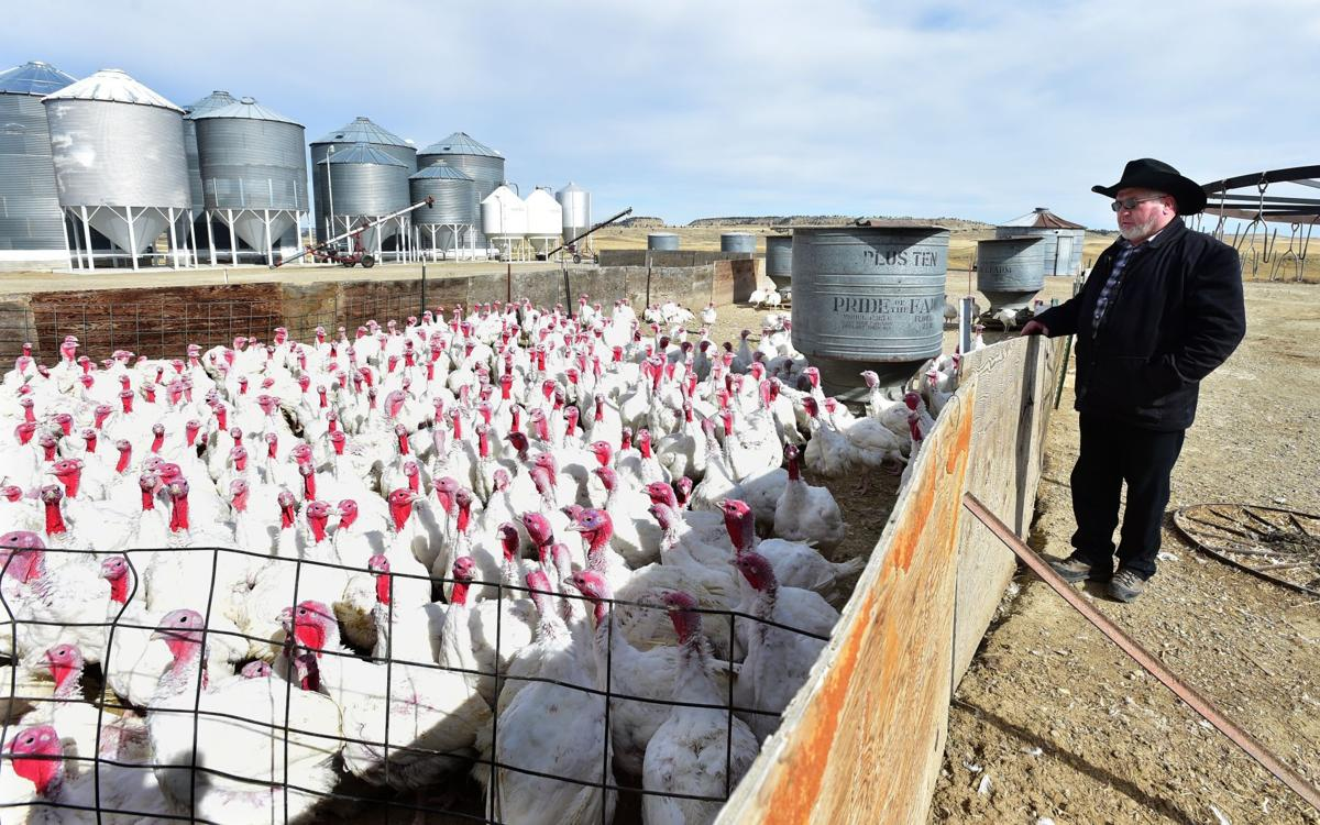 as thanksgiving approaches hutterite colonies are