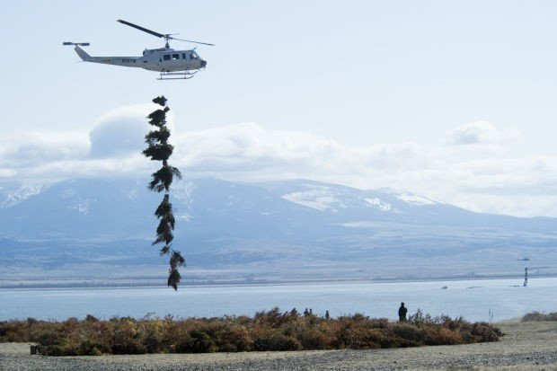 3 500 christmas trees dropped into canyon ferry reservoir for Canyon lake fishing ca