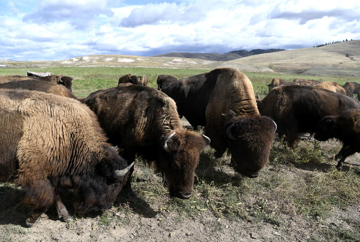Bison Ranch 2