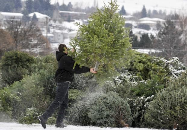 123112 tree recycling SECONDARY