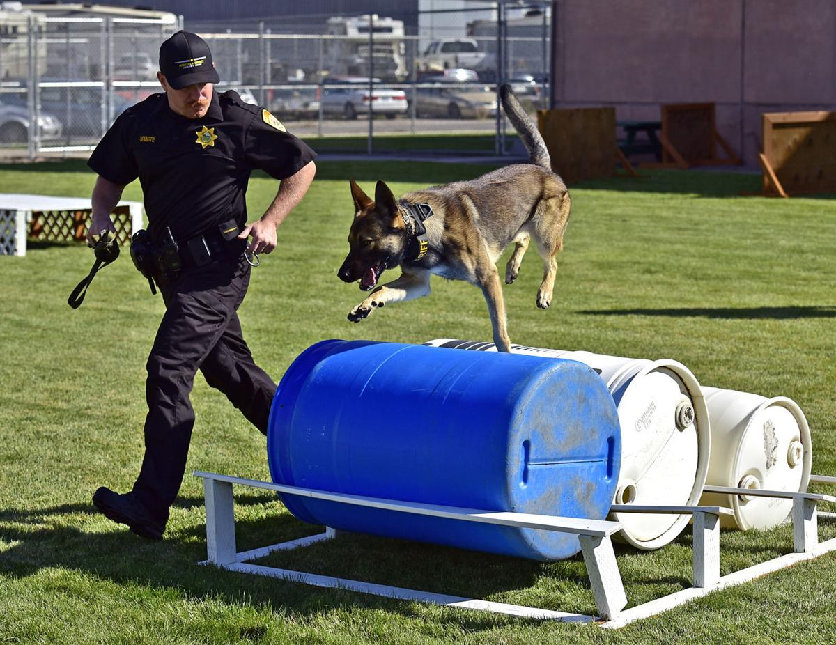 093016-mis-nws-deputy-dogs-02