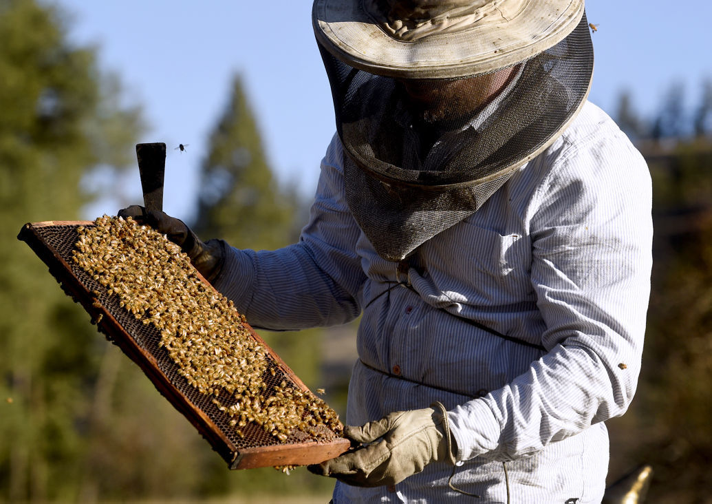 101815 beekeeper2 kw.jpg