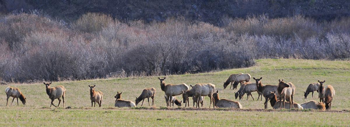 Elk shoulder seasons