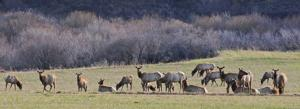 Montanans share concerns over elk shoulder seasons