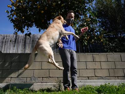 Dogs and health