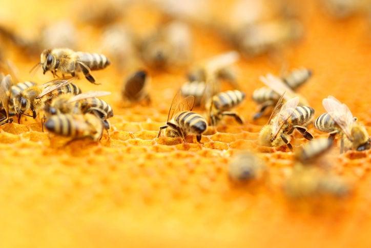 bees honeycomb hive stockimage