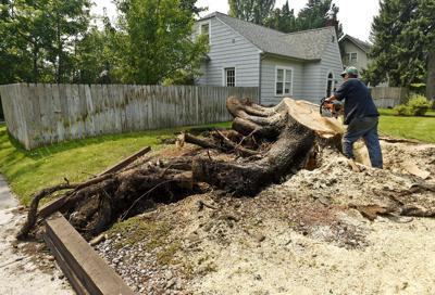 082515-mis-nws-tree-cleanup