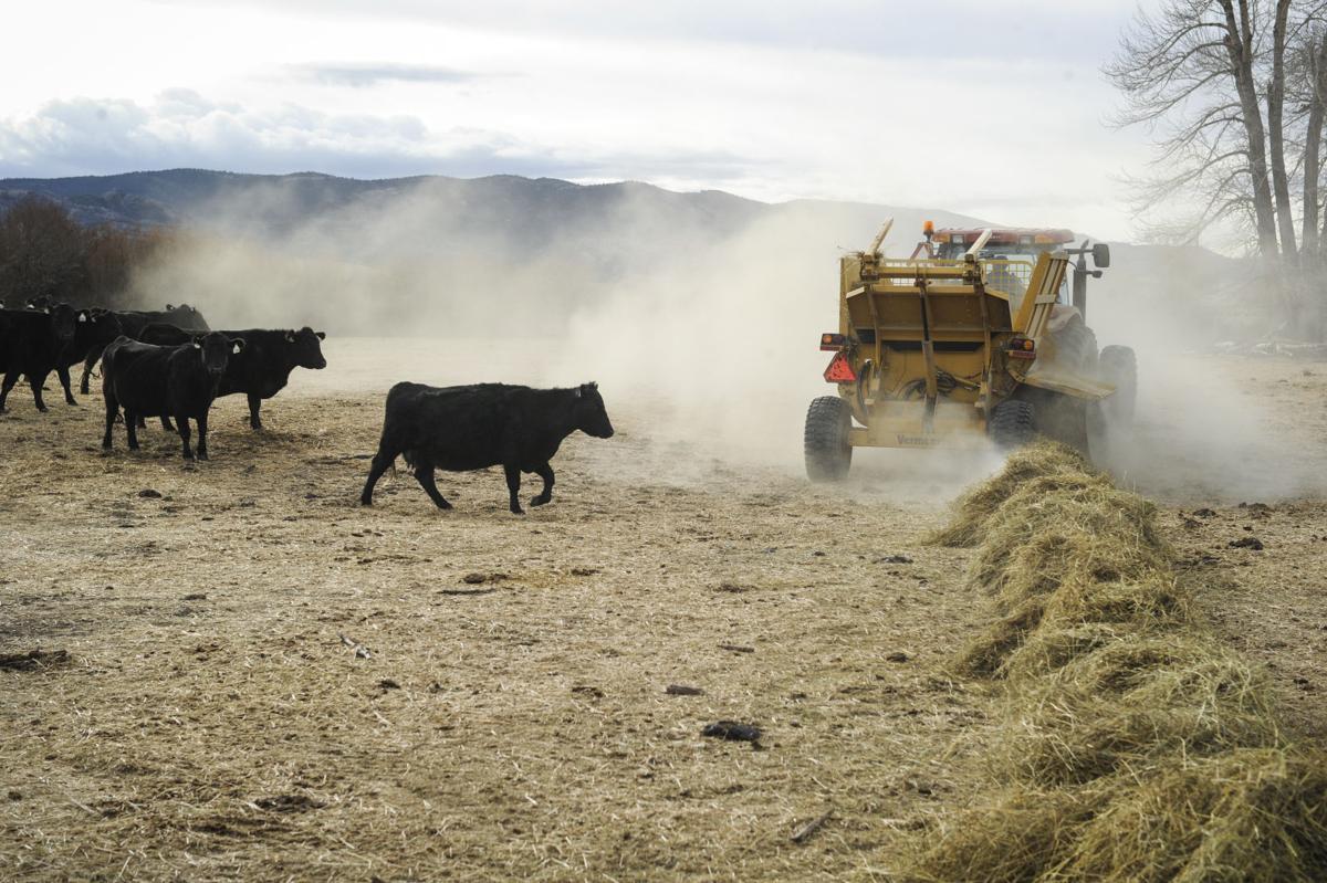 032816-ir-lfs-family-ranch-11.JPG (mis)