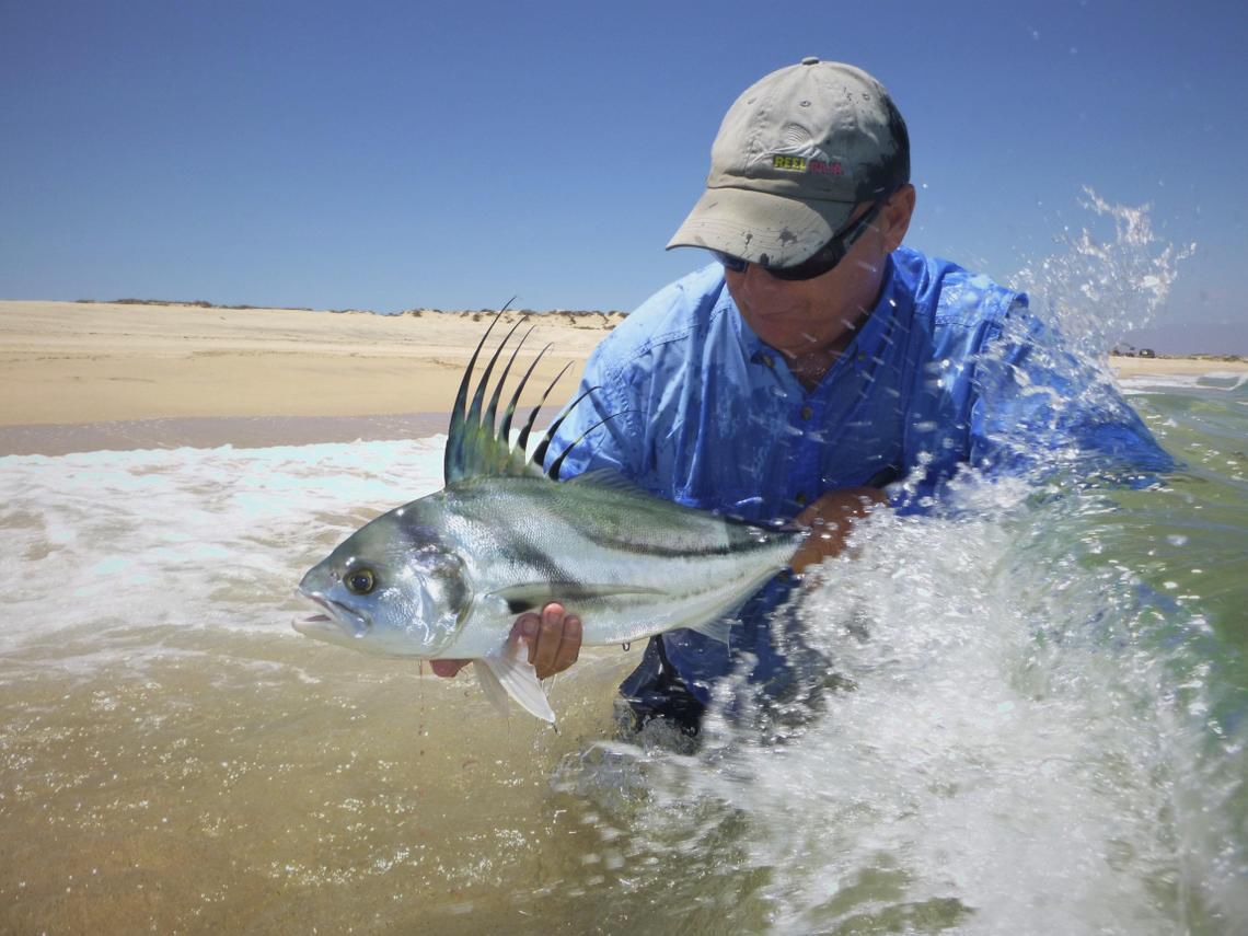 Fly fishers bite at chance to fish in baja outdoors for Rooster fish cabo