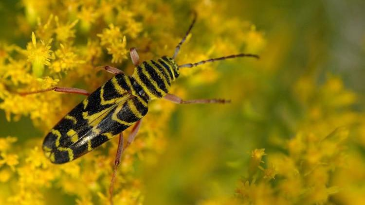 Blue Sky Science: What kinds of beetles use camouflage?