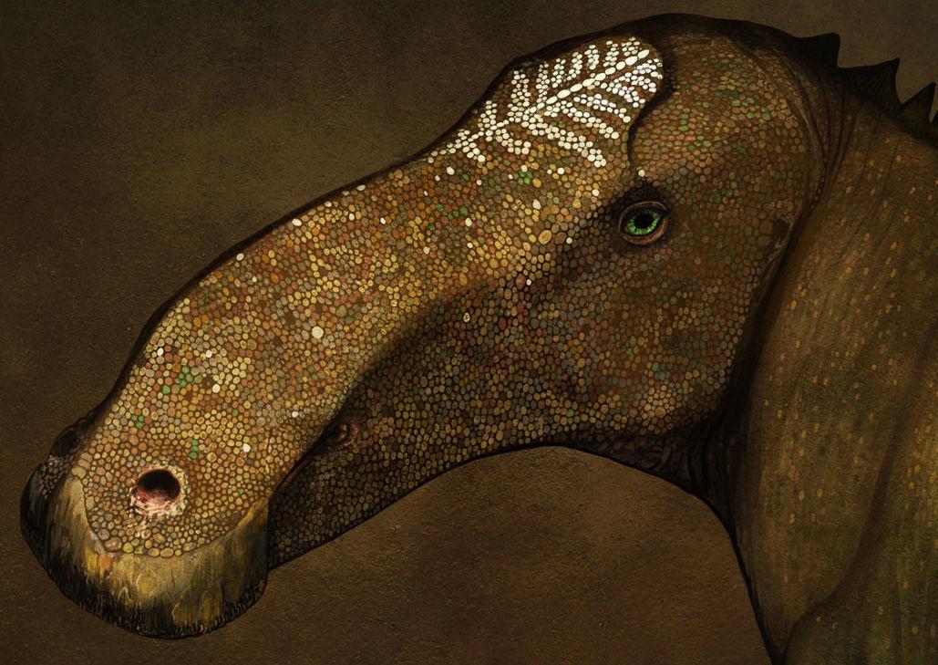 Probrachylophosaurus bergei