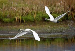 Ninepipes wetlands await management changes