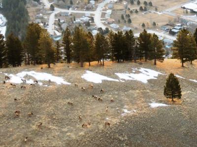040514 mount jumbo elk.jpg