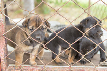 Montana Must Crack Down On Puppy Mills Editorial Missouliancom