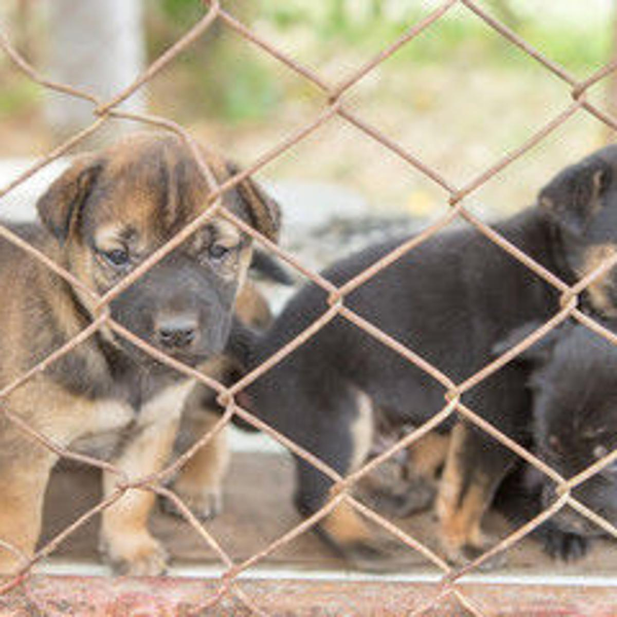 Montana must crack down on puppy mills | Editorial
