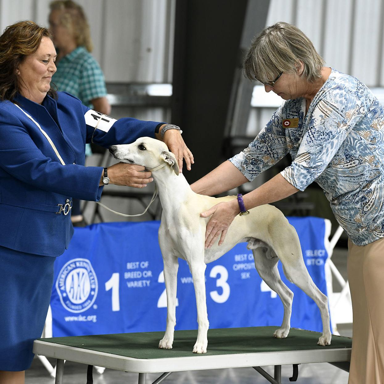 Hundreds of dogs come to Missoula for annual dog show