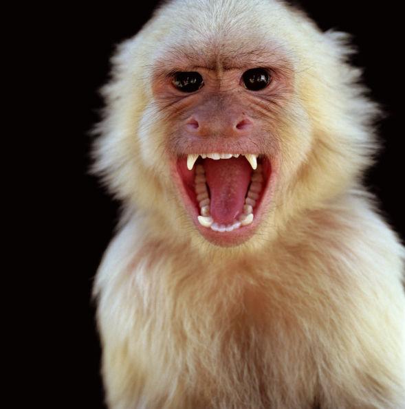 monkey stockimage
