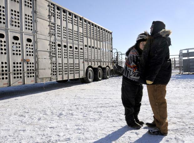 111614 bison32.JPG
