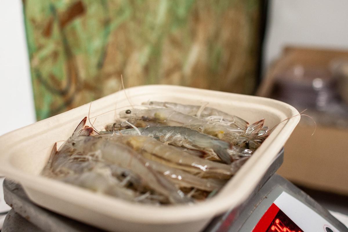 ShrimpFarm3