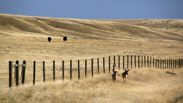 The N Bar Ranch in central Montana