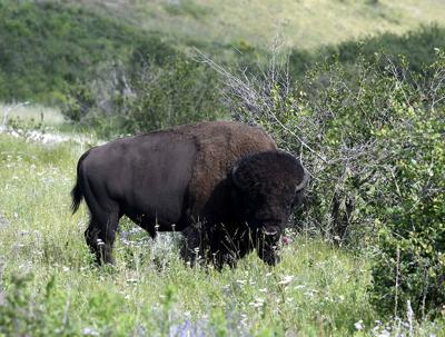 National Bison Range file