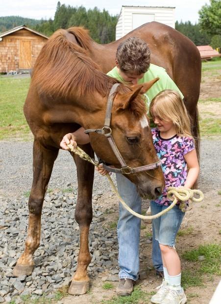 Retired Equine And Care Habitat