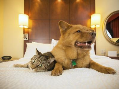 Kimpton Hotels Rolls Out the Red Carpet for its Pet Guests (image)