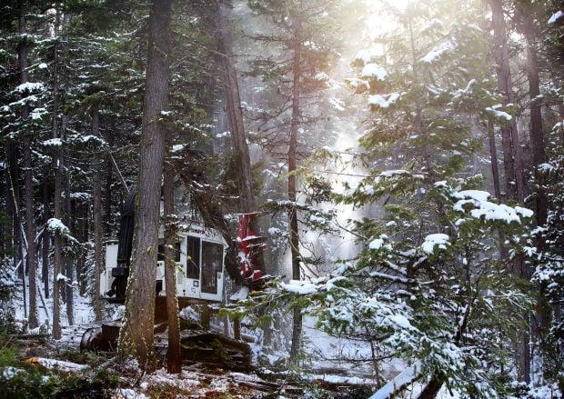 111914-mis-nws-logging