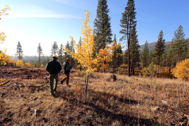 102113 Logging 2