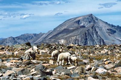 Froze-To-Death Plateau