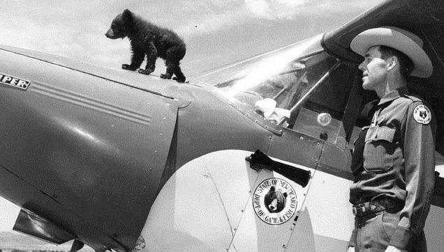 Smokey on a Piper Cub