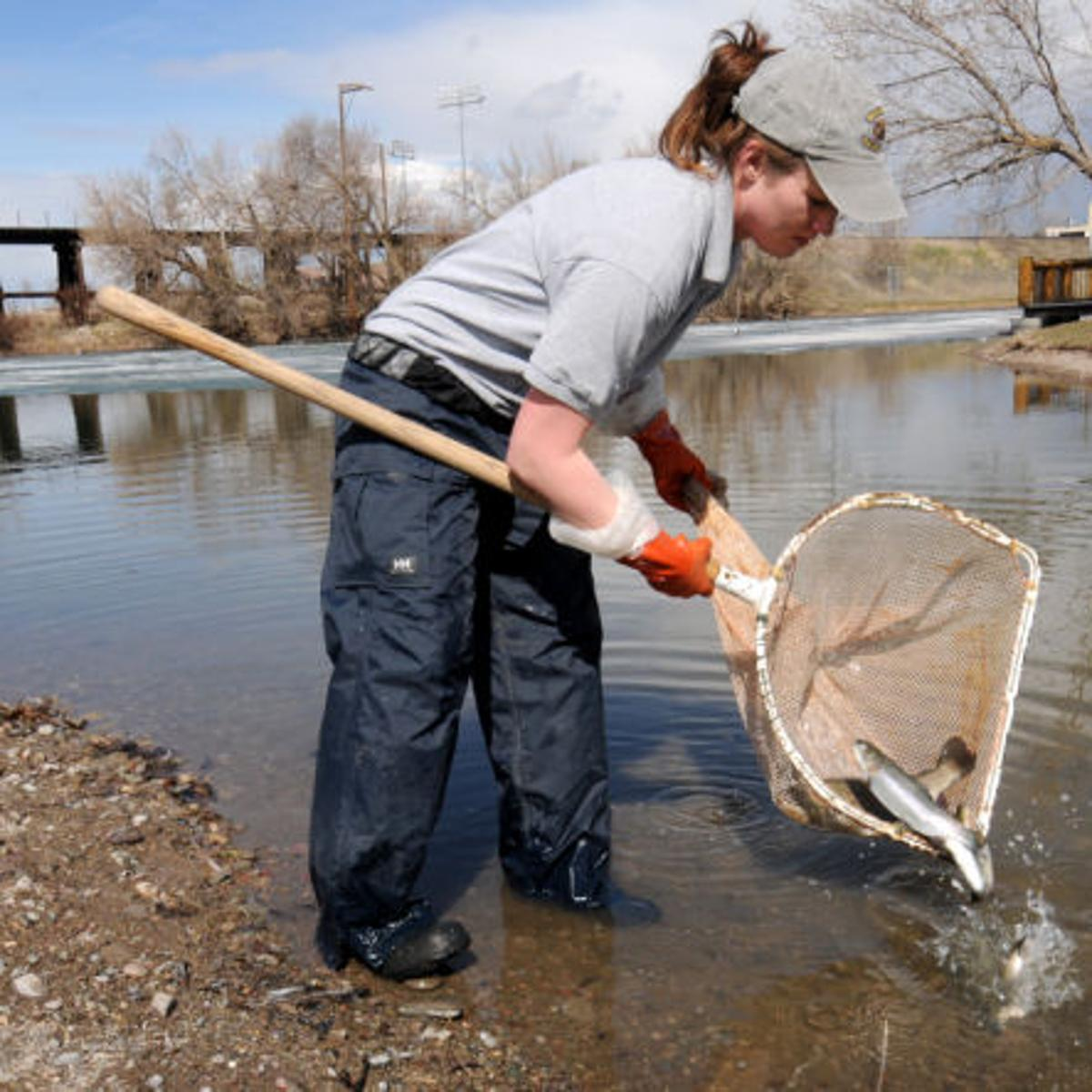 McCormick Park pond stocked with rainbow trout for kids to