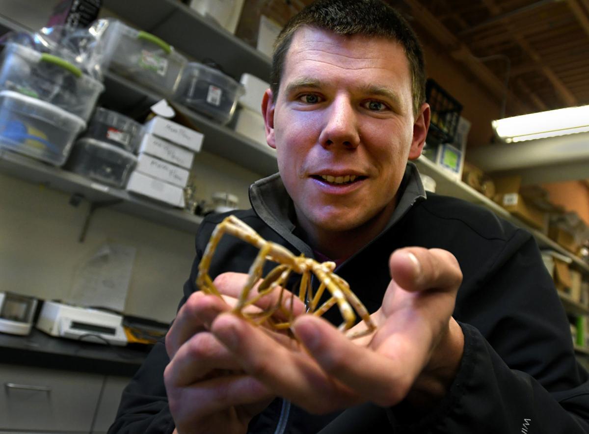 Steven Lane holds a giant sea spider specimen