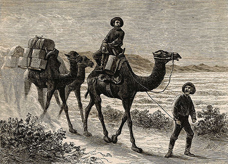 Camels packing miners' supplies