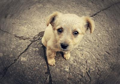 MISSOULIAN EDITORIAL: Time to pass puppy mill laws