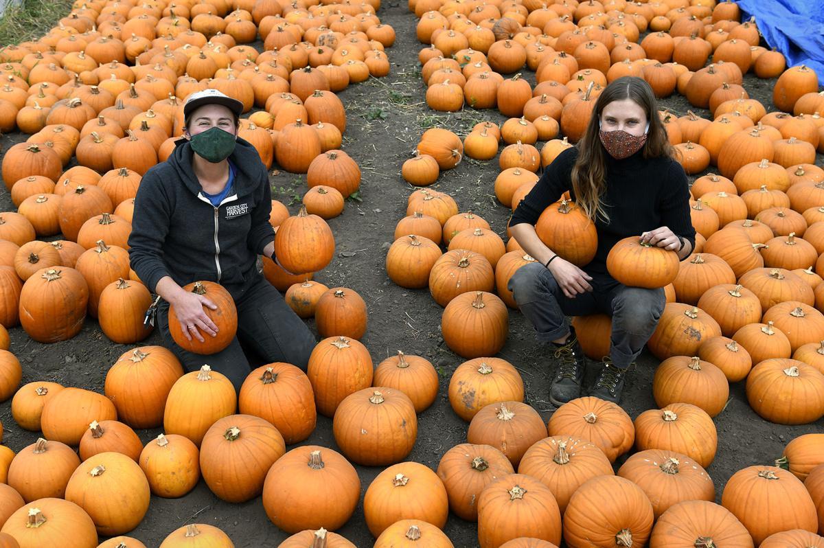 PEAS Pumpkins 1